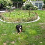 Honden en natuurgras