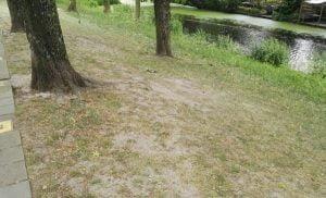 Kale plekken in het gras-onder-de-boom-600x363